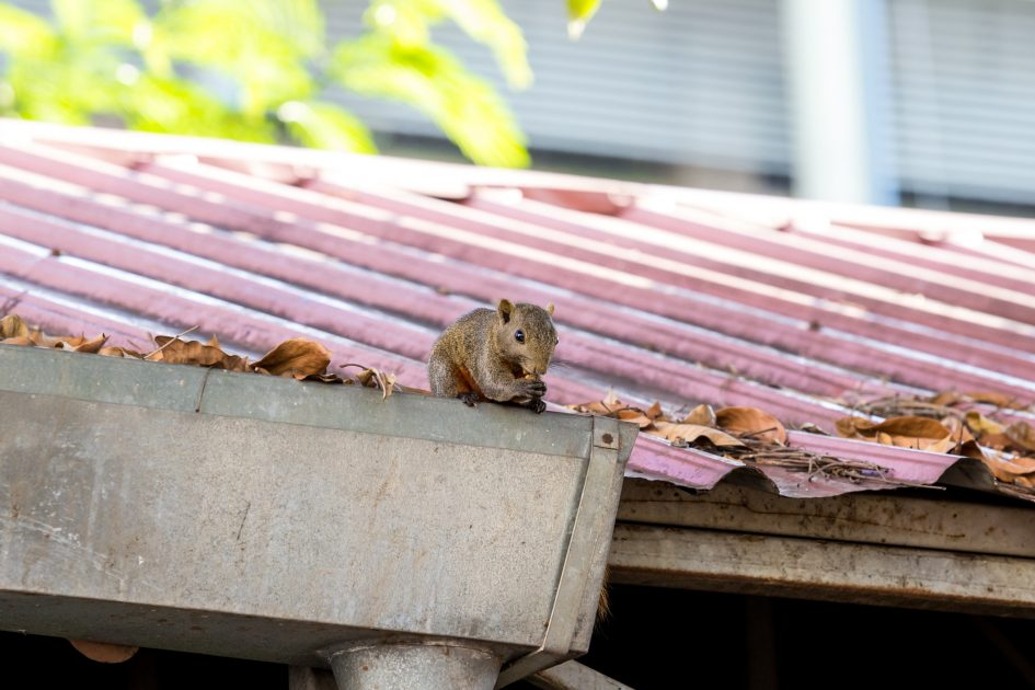 How To Keep Pests Out Of Your Gutters | Gutters Stamford | North East Home Improvement
